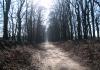 Otterlo_-_Oud_Rees_en_Planken_Wambuis_0469