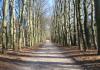 Otterlo_-_Oud_Rees_en_Planken_Wambuis_0482