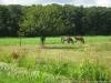 Pelgrimspad: Schoonhoven - Bleskensgraaf