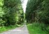 rothaarsteig_-_rodenbach_-_dillenburg_8980