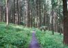 rothhaarsteig_jagdhaus_-_hilchenbach_8607
