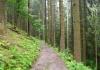 rothhaarsteig_winterberg_-_hoheleye_8597