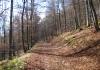 siedlinghausen_-_rundweg_in_naturschutzgebieten_rechts_und_links_der_neger_7735