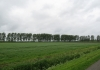 Sint_Philipsland_-_Rammegors_5772