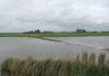 Sint_Philipsland_-_Stinkgat_5792
