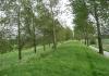 Sint_Philipsland_-_Stinkgat_5794