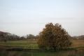 Streekpad Nijmegen: Malden - Plasmolen