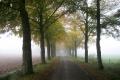 Streekpad Nijmegen: Wijchen - Grave