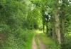 treis-karden_-_buchsbaum_wanderpfad_8556