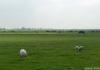 Trekvogelpad_-_Alkmaar_-_Noordeinde_142453