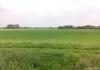 Trekvogelpad_-_Alkmaar_-_Noordeinde_151833