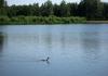 Trekvogelpad_-_Haaldersbroek_-_Landsmeer_5936