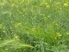 Varsseveld: Noorderbroek en Boven Slinge