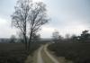 Veluwe_Zwerfpad_-_Dieren_-_Loenen_5253