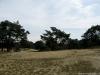 Venray: Overloonse Duinen