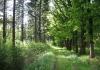 Vorden_-_Almen_-_Landgoed_Enzerinck_en_het_Warkensche_Veld_5811