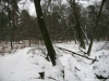 Wolfheze: Laag Wolfheze en Heelsumsche Beek, Wolfhezerbosch en Wolfhezerbeek